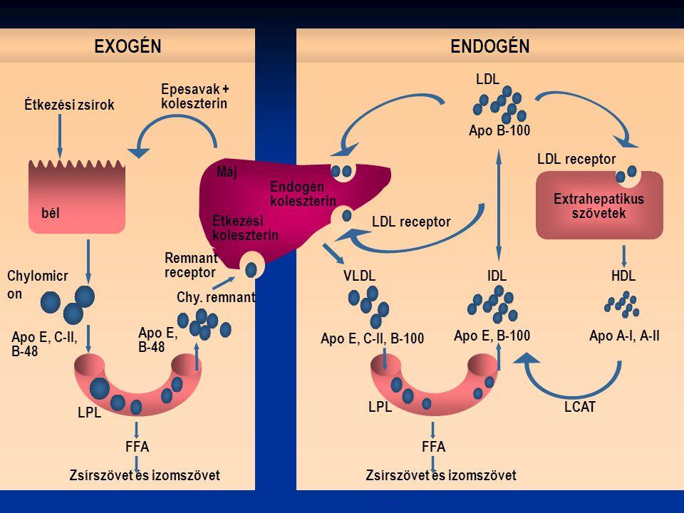 Az EZETIMIB a koleszterin felszívódását gátolja.