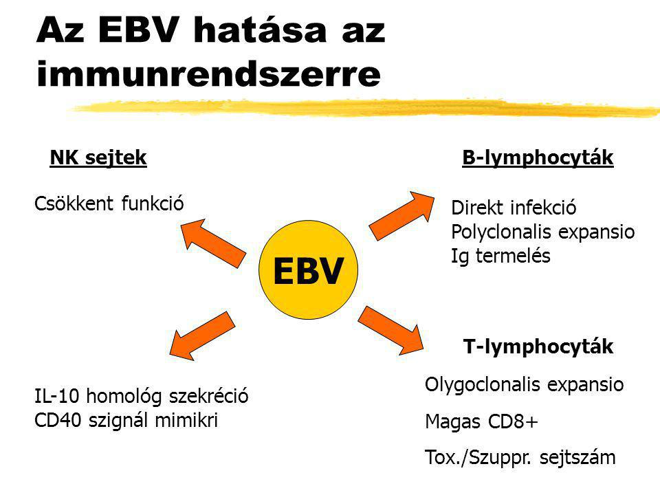 Az EBV hatása az immunrendszerre B-lymphocyták Direkt infekció Polyclonalis expansio Ig termelés T-lymphocyták Olygoclonalis expansio Magas CD8+ Tox./