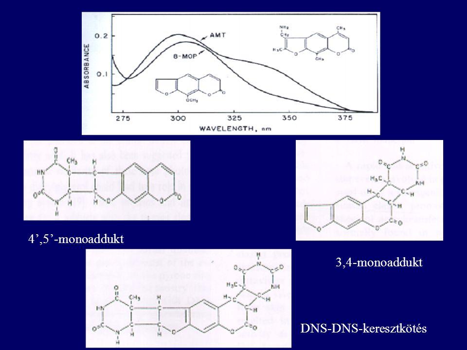 4',5'-monoaddukt 3,4-monoaddukt DNS-DNS-keresztkötés