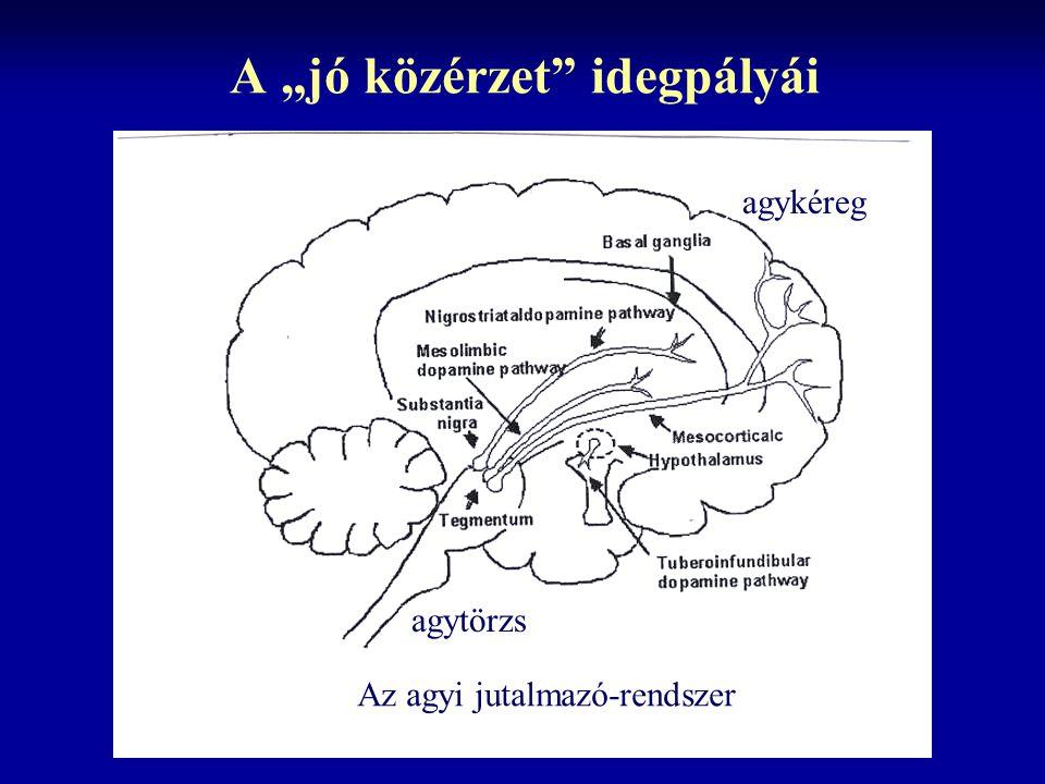 """A """"jó közérzet idegpályái agytörzs agykéreg Az agyi jutalmazó-rendszer"""