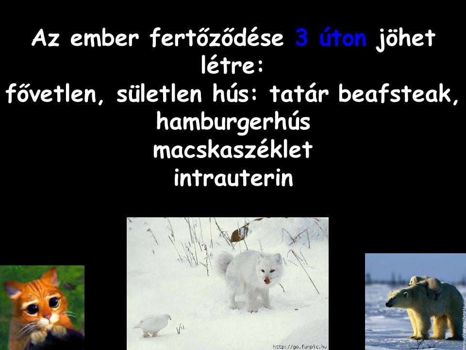 Az ember fertőződése 3 úton jöhet létre: fővetlen, sületlen hús: tatár beafsteak, hamburgerhús macskaszéklet intrauterin