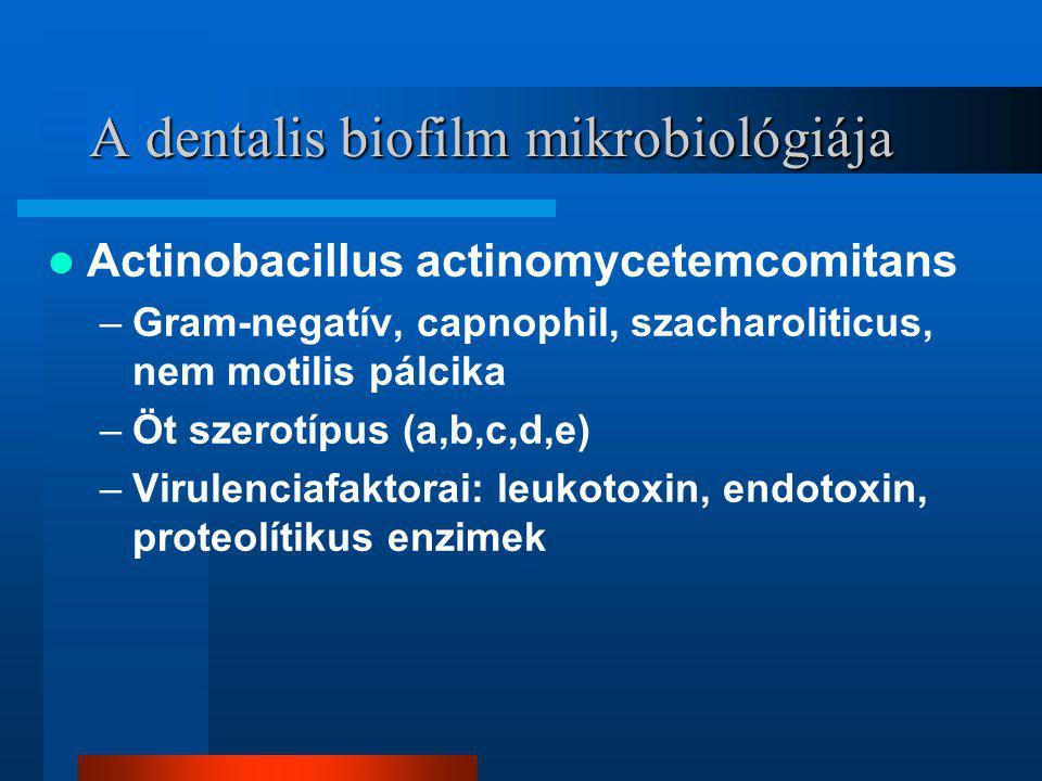 A dentalis biofilm mikrobiológiája Actinobacillus actinomycetemcomitans –Gram-negatív, capnophil, szacharoliticus, nem motilis pálcika –Öt szerotípus (a,b,c,d,e) –Virulenciafaktorai: leukotoxin, endotoxin, proteolítikus enzimek