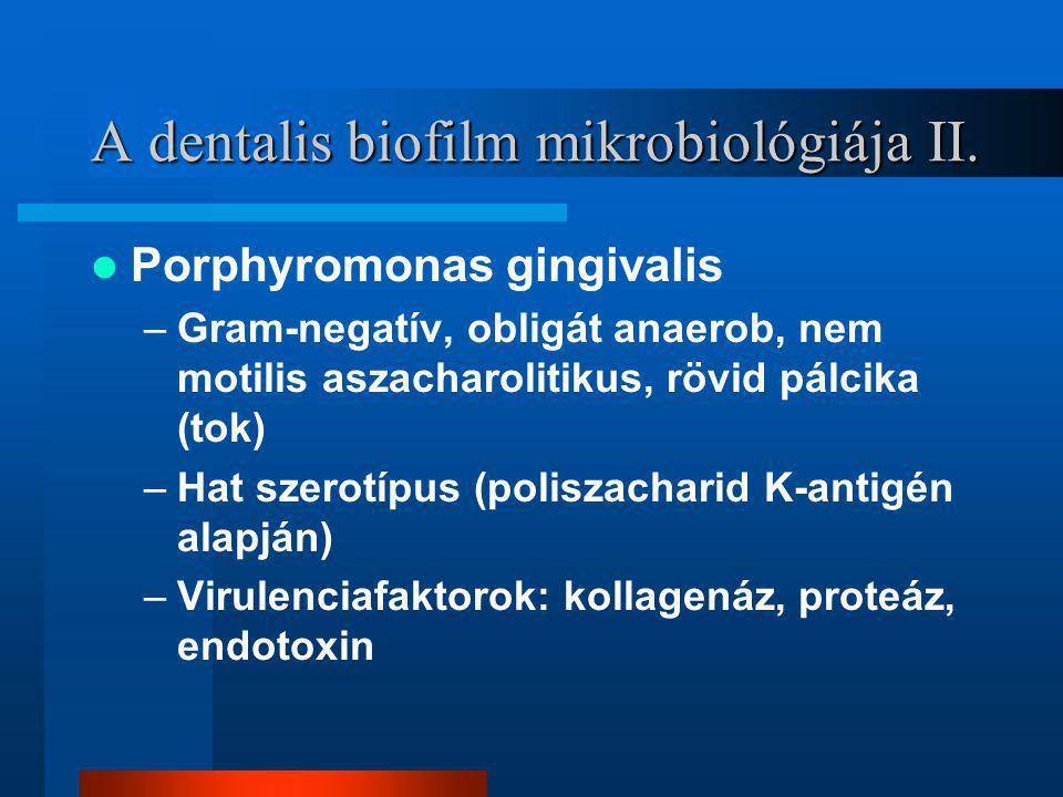 A dentalis biofilm mikrobiológiája II.