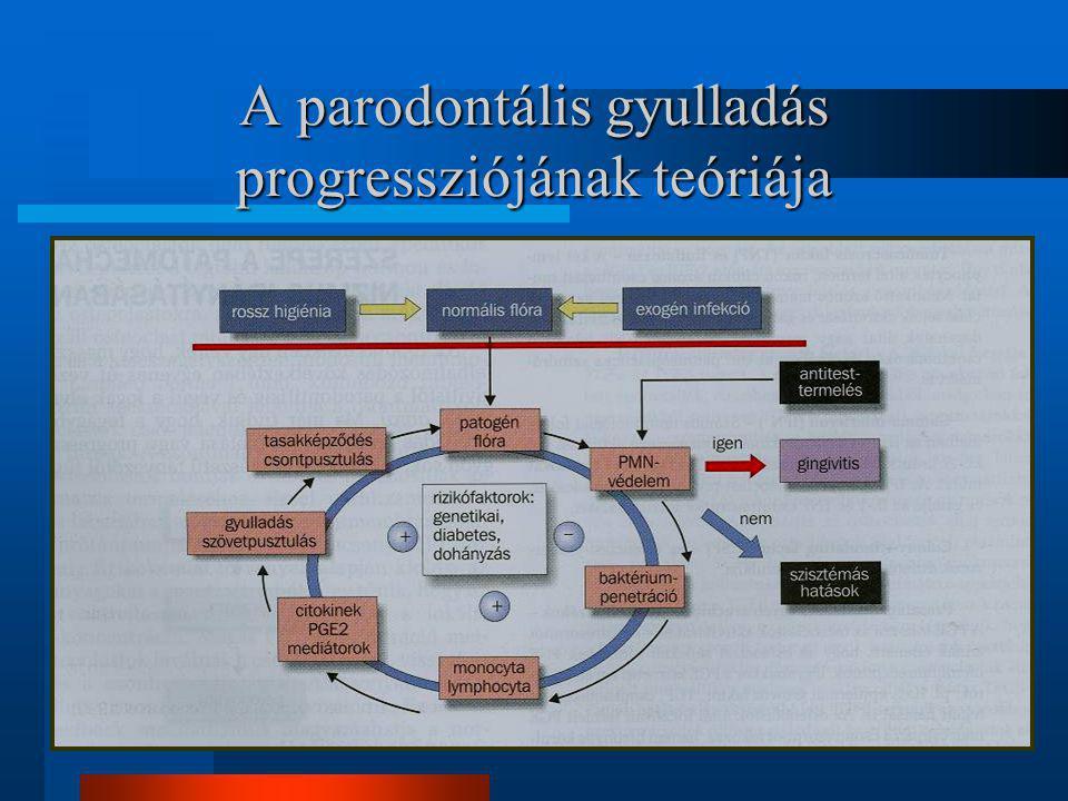 A parodontális gyulladás progressziójának teóriája
