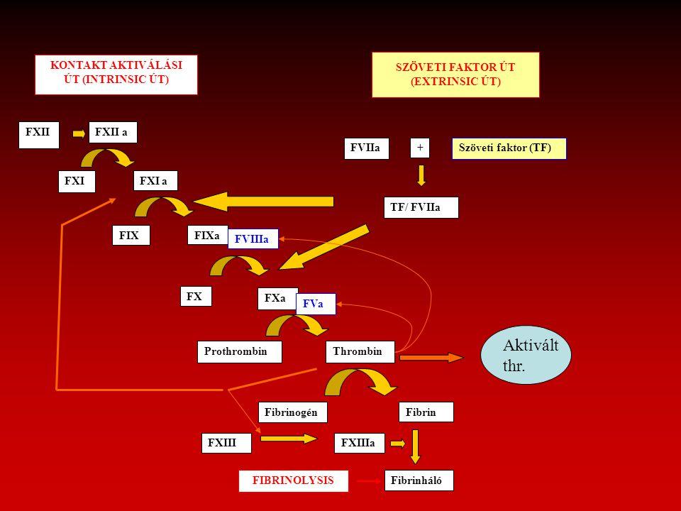 KONTAKT AKTIVÁLÁSI ÚT (INTRINSIC ÚT) SZÖVETI FAKTOR ÚT (EXTRINSIC ÚT) FXIIFXII a FXIFXI a FIXFIXa FVIIIa FX FXa FVa ProthrombinThrombin FibrinogénFibr