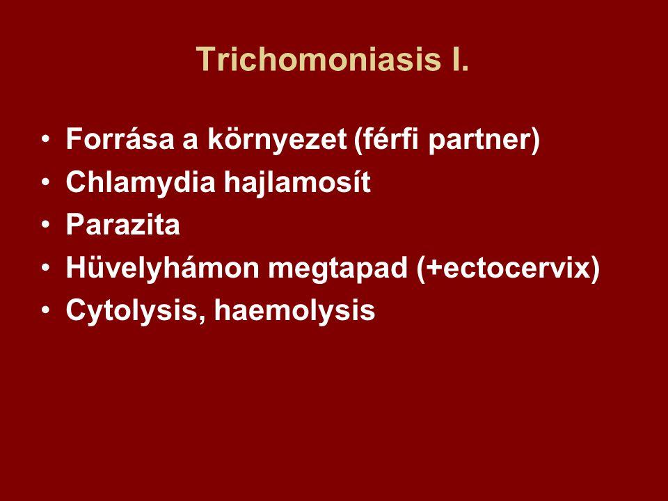 Trichomoniasis I. Forrása a környezet (férfi partner) Chlamydia hajlamosít Parazita Hüvelyhámon megtapad (+ectocervix) Cytolysis, haemolysis