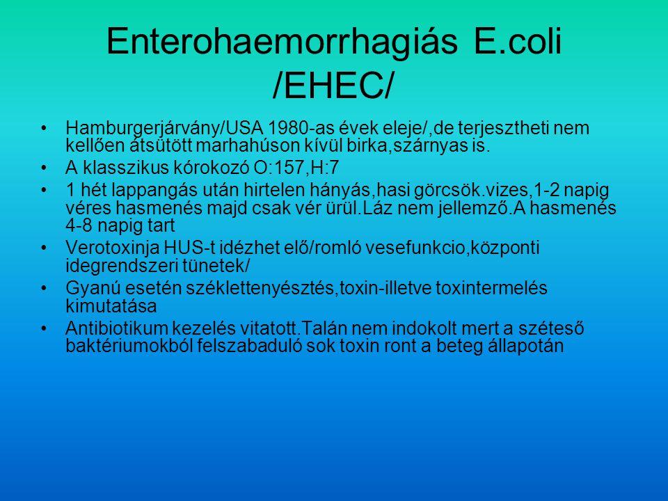 Enterohaemorrhagiás E.coli /EHEC/ Hamburgerjárvány/USA 1980-as évek eleje/,de terjesztheti nem kellően átsütött marhahúson kívül birka,szárnyas is.
