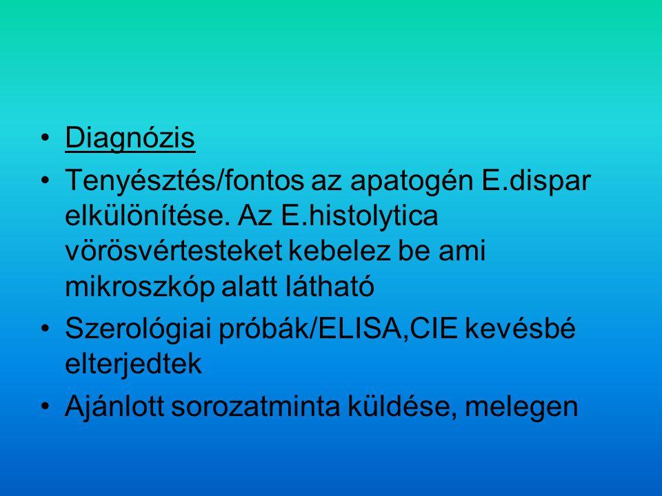 Diagnózis Tenyésztés/fontos az apatogén E.dispar elkülönítése.