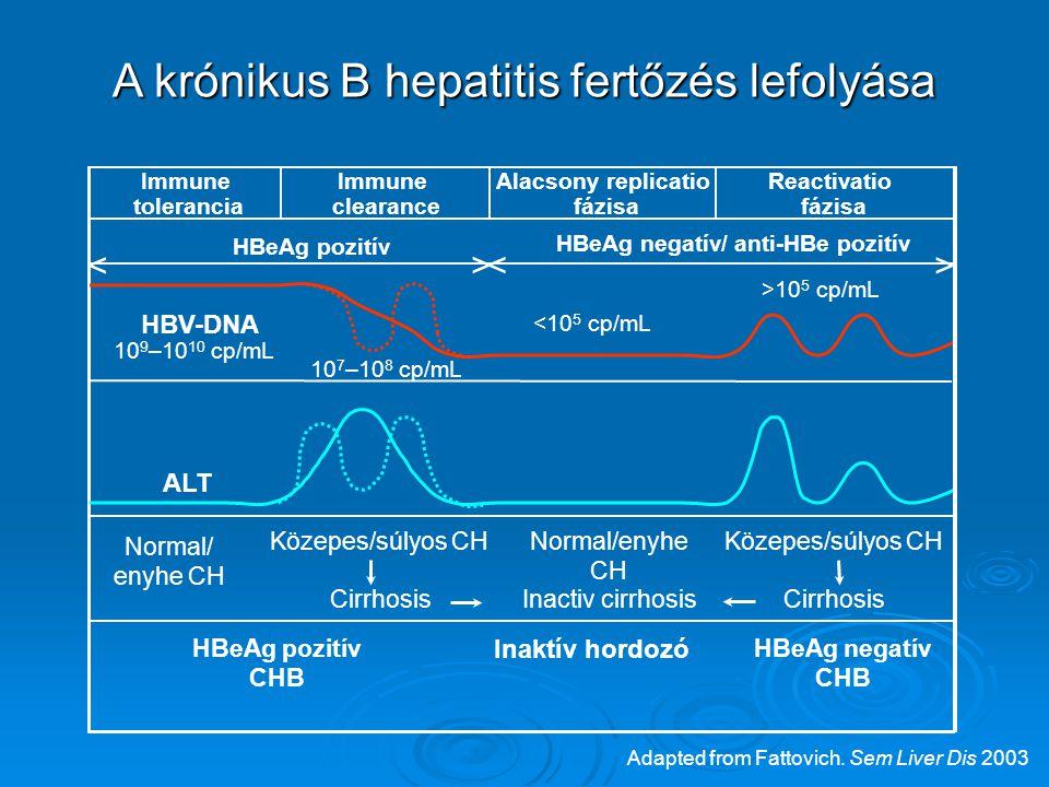 < <> > HBeAg pozitív HBeAg negatív/ anti-HBe pozitív ALT HBV-DNA Normal/ enyhe CH Közepes/súlyos CH Normal/enyhe CH Cirrhosis Inaktív hordozó HBeAg negatív CHB HBeAg pozitív CHB Immune tolerancia Immune clearance Alacsony replicatio fázisa Reactivatio fázisa Cirrhosis 10 9 –10 10 cp/mL 10 7 –10 8 cp/mL <10 5 cp/mL >10 5 cp/mL Inactiv cirrhosis A krónikus B hepatitis fertőzés lefolyása Adapted from Fattovich.