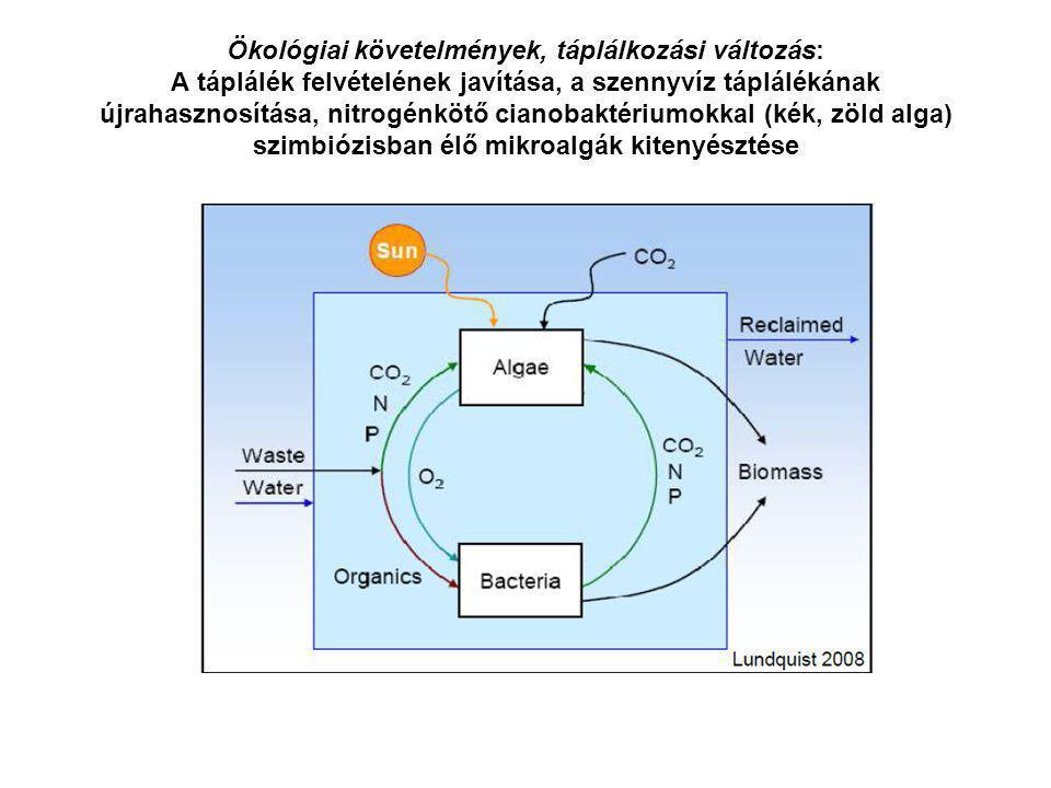 Ökológiai követelmények, táplálkozási változás: A táplálék felvételének javítása, a szennyvíz táplálékának újrahasznosítása, nitrogénkötő cianobaktéri