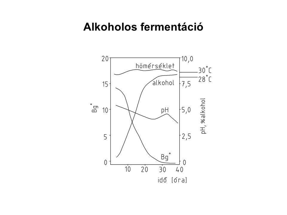 Alkoholos fermentáció
