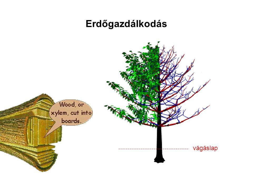 Erdőgazdálkodás vágáslap