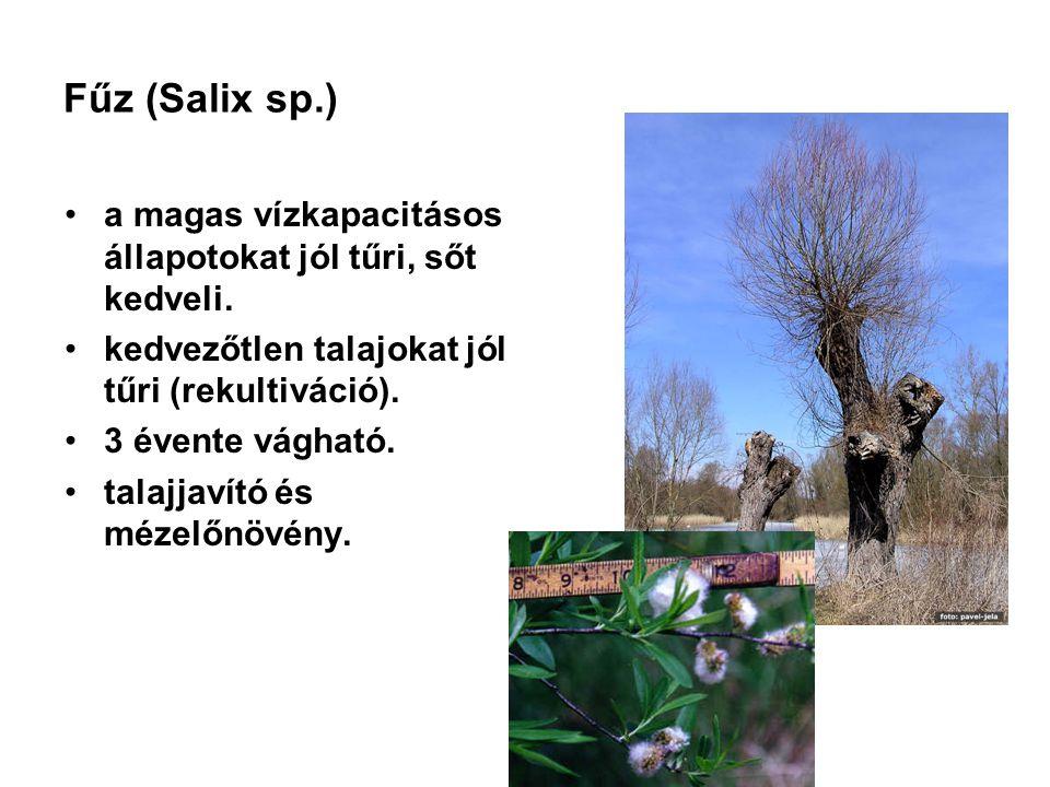 Fűz (Salix sp.) a magas vízkapacitásos állapotokat jól tűri, sőt kedveli. kedvezőtlen talajokat jól tűri (rekultiváció). 3 évente vágható. talajjavító