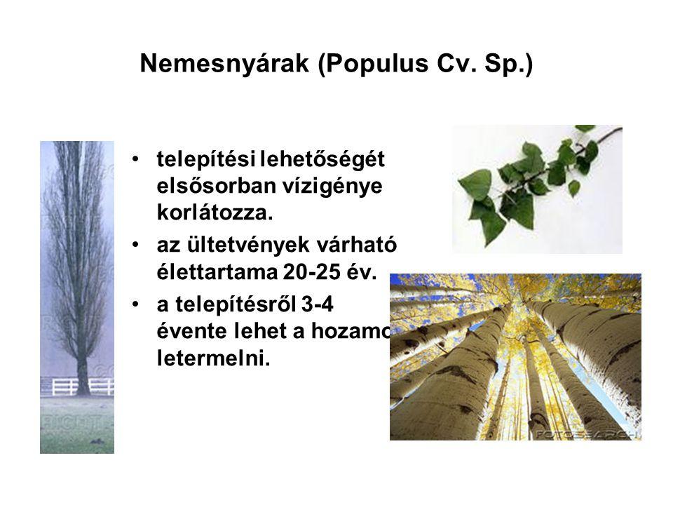 Nemesnyárak (Populus Cv. Sp.) telepítési lehetőségét elsősorban vízigénye korlátozza. az ültetvények várható élettartama 20-25 év. a telepítésről 3-4