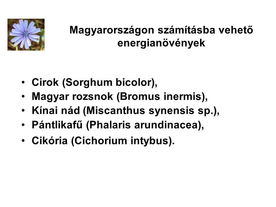 Magyarországon számításba vehető energianövények Cirok (Sorghum bicolor), Magyar rozsnok (Bromus inermis), Kínai nád (Miscanthus synensis sp.), Pántli