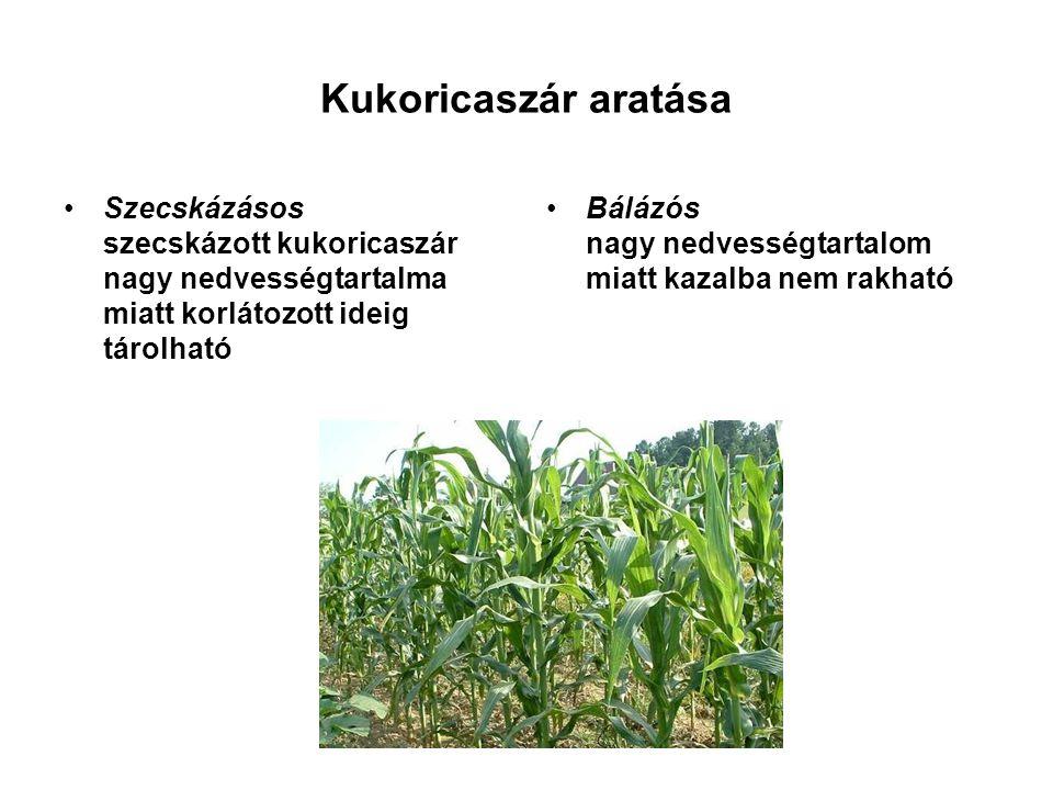Kukoricaszár aratása Szecskázásos szecskázott kukoricaszár nagy nedvességtartalma miatt korlátozott ideig tárolható Bálázós nagy nedvességtartalom miatt kazalba nem rakható
