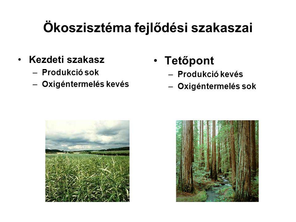 Ökoszisztéma fejlődési szakaszai Kezdeti szakasz –Produkció sok –Oxigéntermelés kevés Tetőpont –Produkció kevés –Oxigéntermelés sok