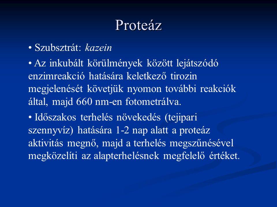 Proteáz Szubsztrát: kazein Az inkubált körülmények között lejátszódó enzimreakció hatására keletkező tirozin megjelenését követjük nyomon további reakciók által, majd 660 nm-en fotometrálva.