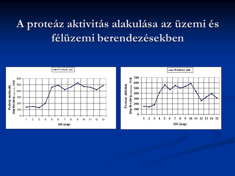 A proteáz aktivitás alakulása az üzemi és félüzemi berendezésekben