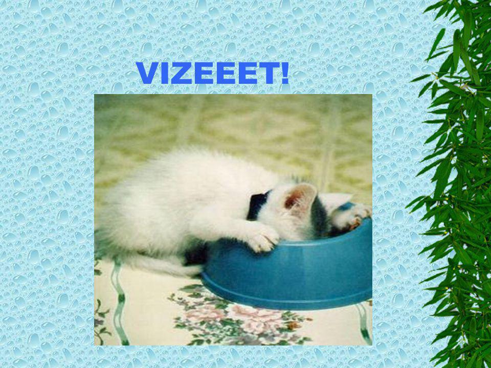VIZEEET!
