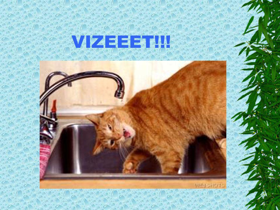 VIZEEET!!!