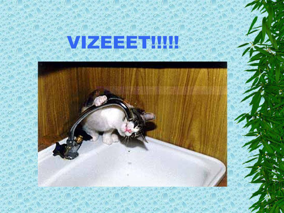 VIZEEET!!!!!
