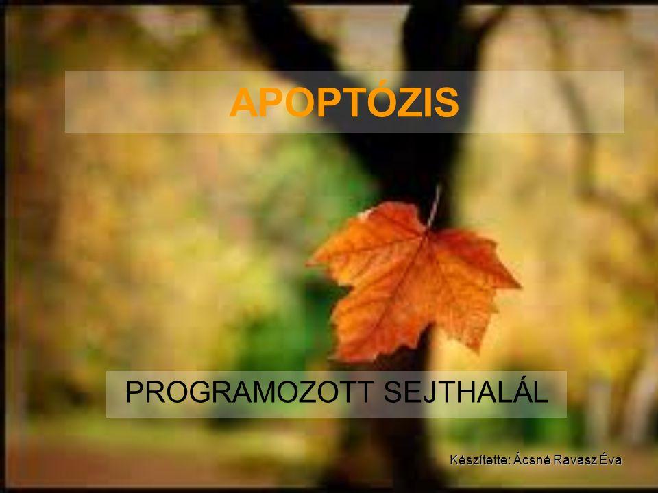 APOPTÓZIS PROGRAMOZOTT SEJTHALÁL Készítette: Ácsné Ravasz Éva