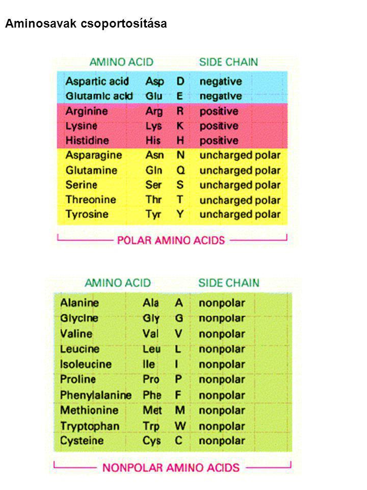Aminosavak csoportosítása