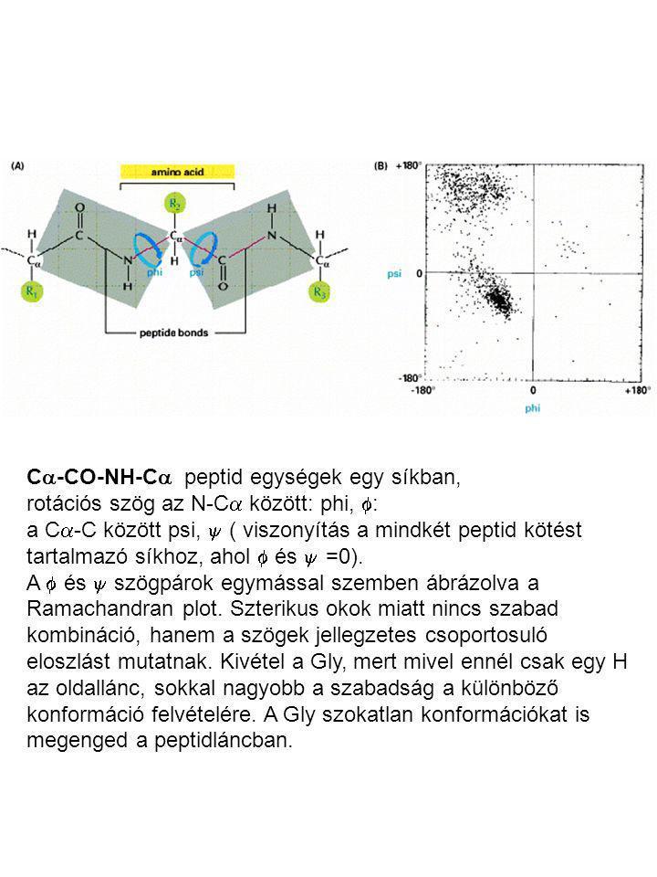 C  -CO-NH-C  peptid egységek egy síkban, rotációs szög az N-C  között: phi,  : a C  -C között psi,  ( viszonyítás a mindkét peptid kötést tartal