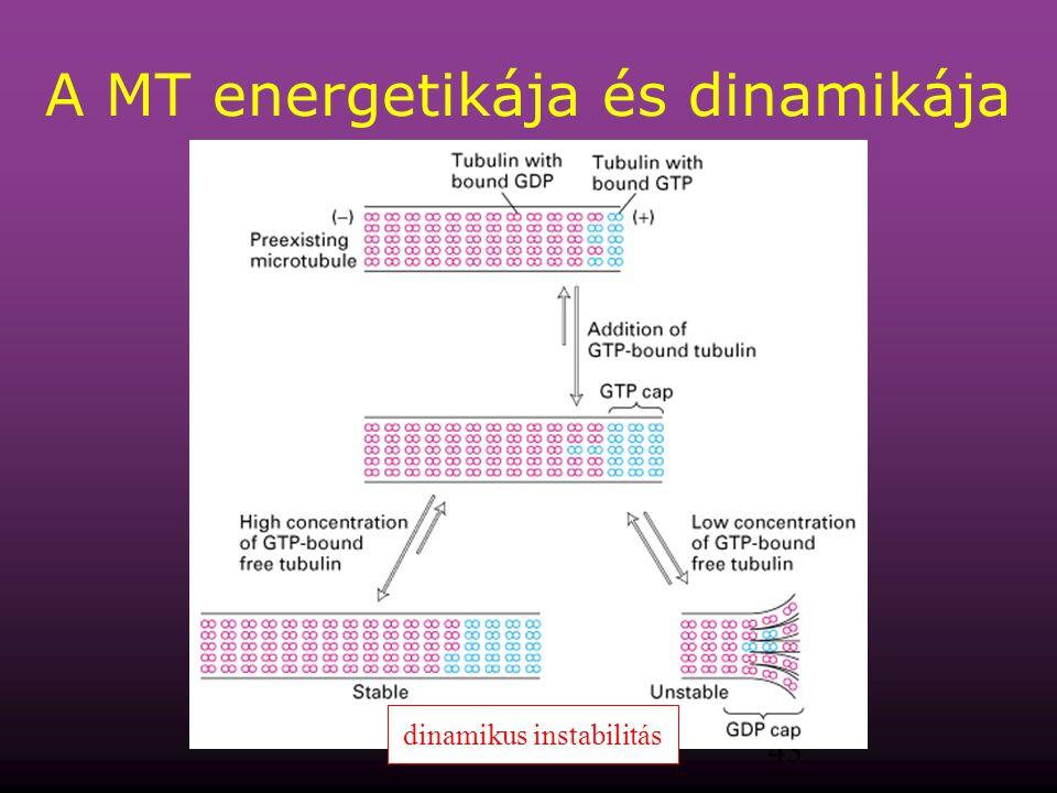 43 A MT energetikája és dinamikája dinamikus instabilitás