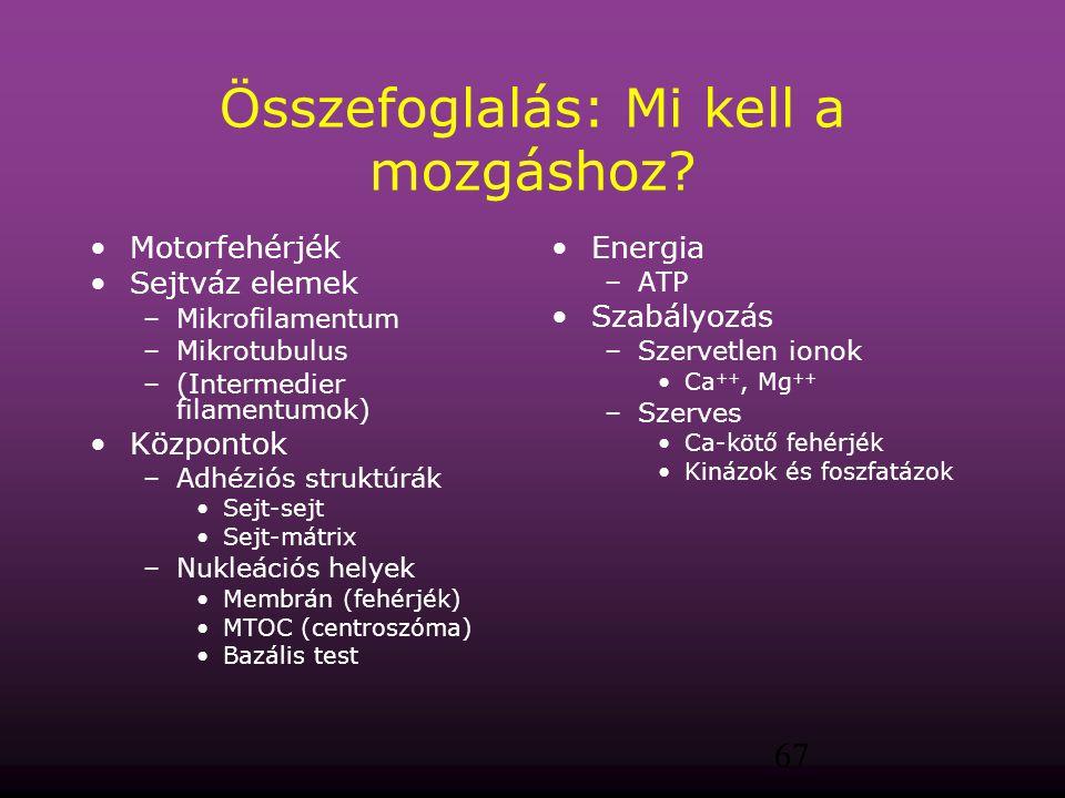 67 Összefoglalás: Mi kell a mozgáshoz? Motorfehérjék Sejtváz elemek –Mikrofilamentum –Mikrotubulus –(Intermedier filamentumok) Központok –Adhéziós str