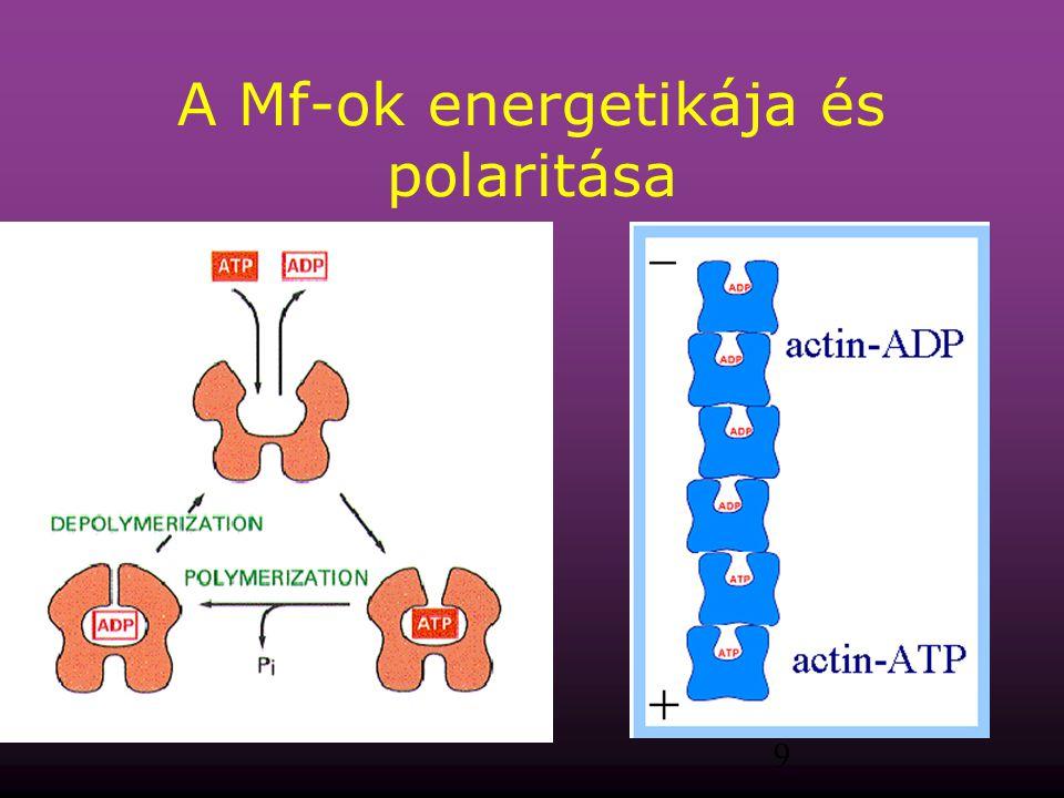 9 A Mf-ok energetikája és polaritása