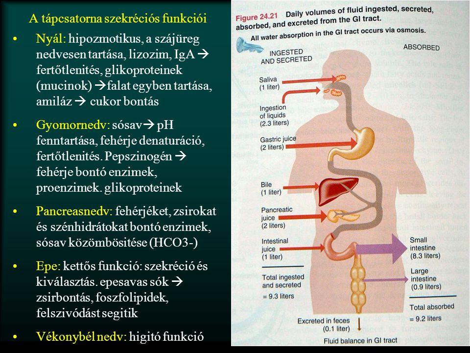 A tápcsatorna szekréciós funkciói Nyál: hipozmotikus, a szájüreg nedvesen tartása, lizozim, IgA  fertőtlenités, glikoproteinek (mucinok)  falat egyb
