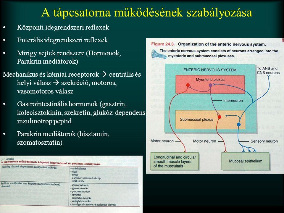 A tápcsatorna működésének szabályozása Központi idegrendszeri reflexek Enterális idegrendszeri reflexek Mirigy sejtek rendszere (Hormonok, Parakrin me