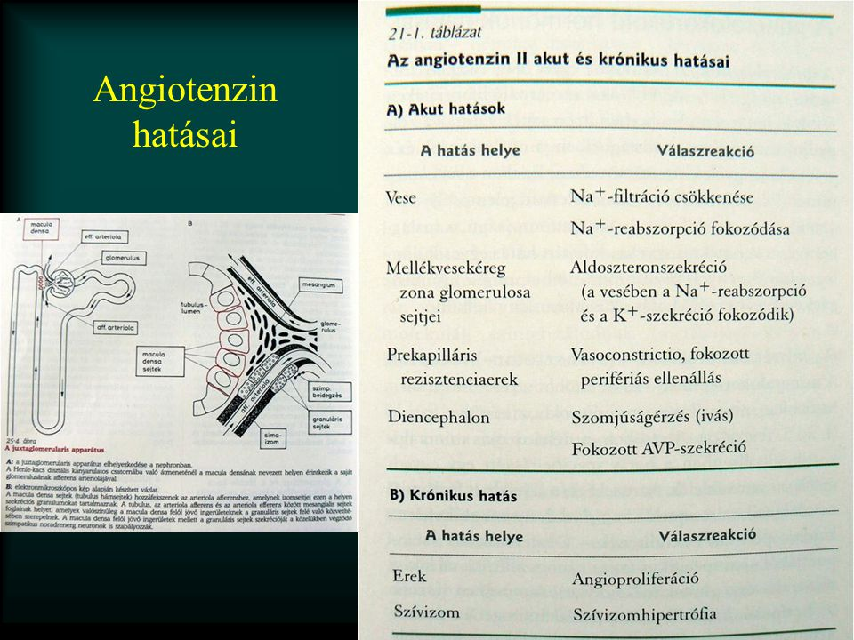 Angiotenzin hatásai
