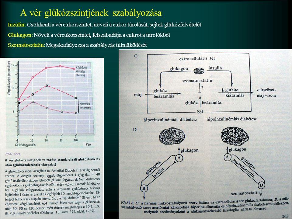 A vér glükózszintjének szabályozása Inzulin: Csökkenti a vércukorszintet, növeli a cukor tárolását, sejtek glükózfelvételét Glukagon: Növeli a vércukorszintet, felszabaditja a cukrot a tárolókból Szomatosztatin: Megakadályozza a szabályzás túlmüködését