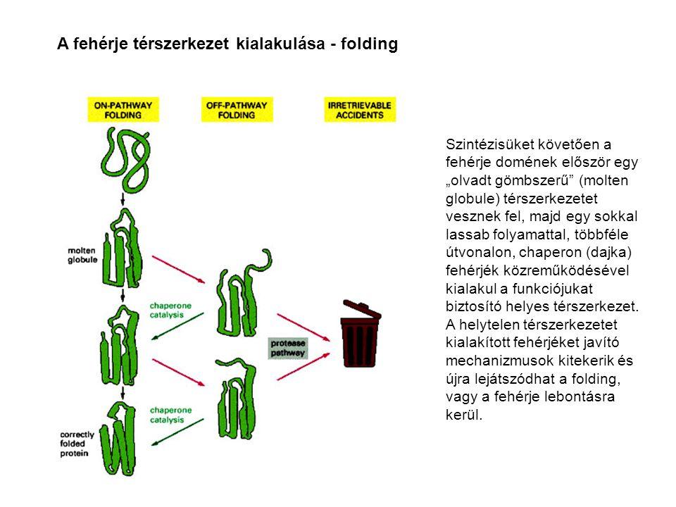 A polipedtid láncok térszerkezete a szintézist követően a szerkezeti és funkcionális önállósággal rendelkező részletenként – doménenként – alakul ki.
