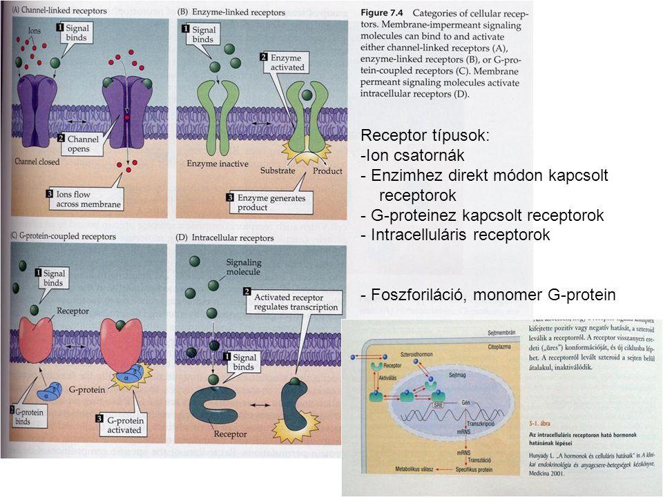http://www.indstate.edu/thcme/mwking/aminoacidderivatives.html