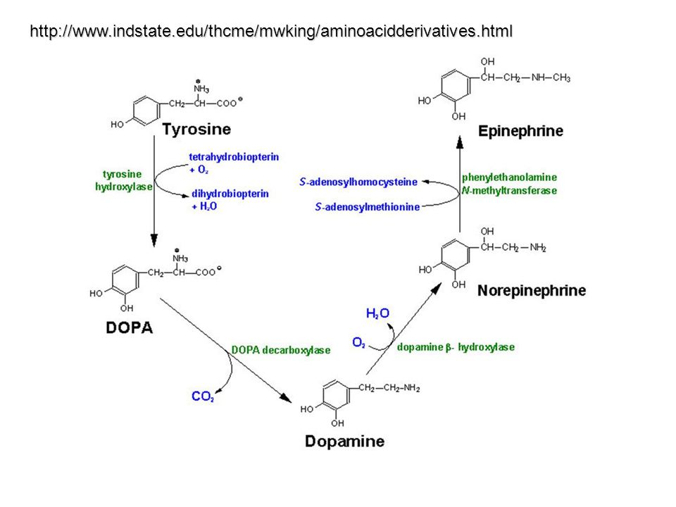 http://www.indstate.edu/thcme/mwking/aminoacidderivatives.html