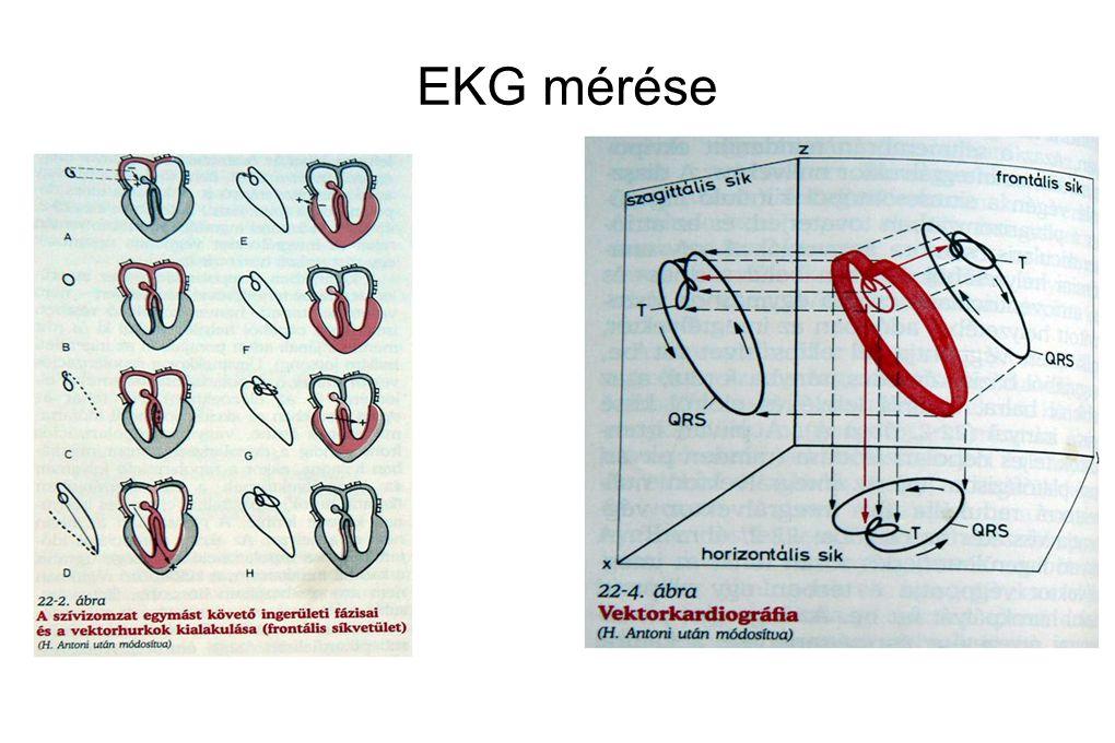 EKG mérése