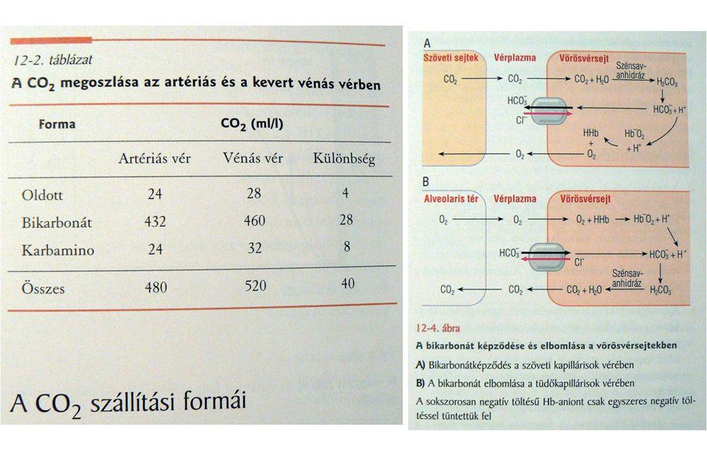 A vér összetétele Vérplazma (Viz, fehérjék – albumins, globulinok, fibrinogén, - ionok, stb.