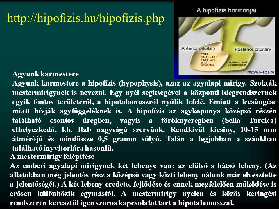 http://hipofizis.hu/hipofizis.php Agyunk karmestere Agyunk karmestere a hipofízis (hypophysis), azaz az agyalapi mirigy. Szokták mestermirigynek is ne