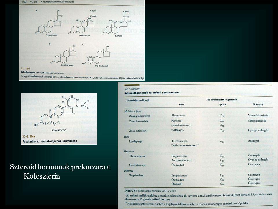 Szteroid hormonok prekurzora a Koleszterin