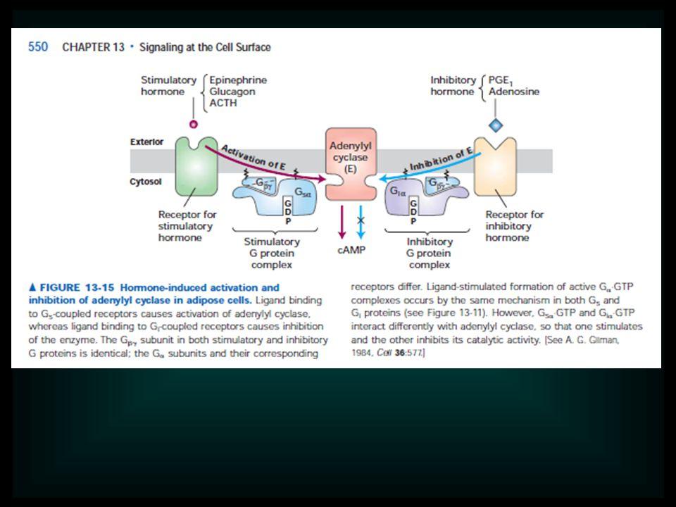 Az agyi szabályozó központ a hipotalamusz-hipofízis rendszer.