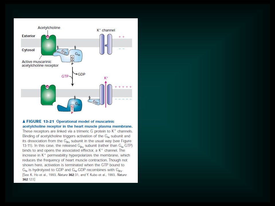 Receptor activation is the term used to describe conformational changes in the receptor induced by binding hormone.