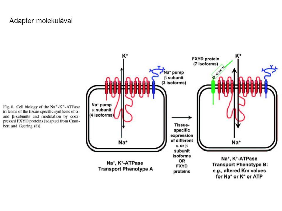 Adapter molekulával