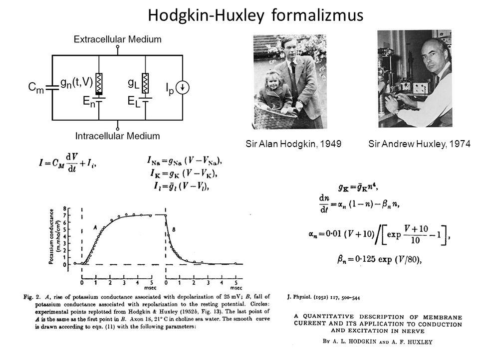 Hodgkin-Huxley formalizmus Sir Alan Hodgkin, 1949 Sir Andrew Huxley, 1974