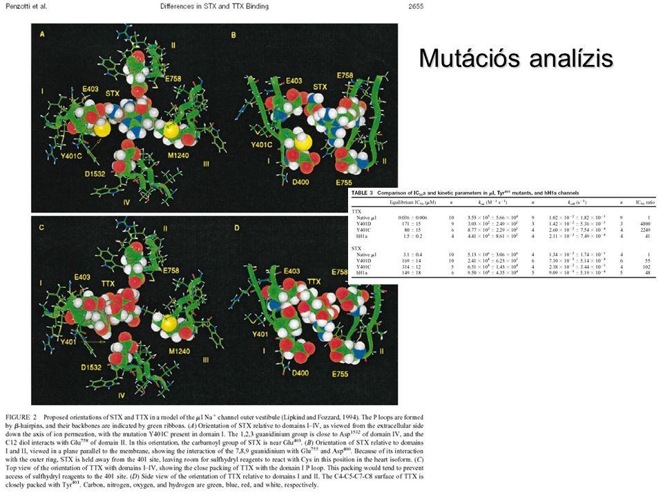 Mutációs analízis