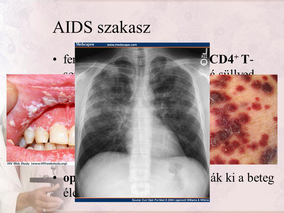 AIDS szakasz fertőződés után 8-12 évvel a CD4 + T- sejtek száma kritikus érték alá süllyed nem képes a szervezet kialakítani az immunválaszt két- háro