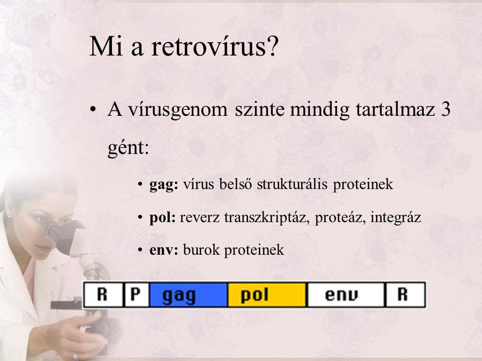 HIV terápiák NRTI nukleotid analóg reverz transzkriptáz inhibítor NNRTI nem nukleotid analóg reverz transzkriptáz inhibítor PI proteáz inhibítor Egyéb inhibítorok